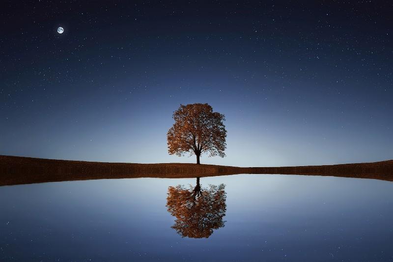 tree-838667